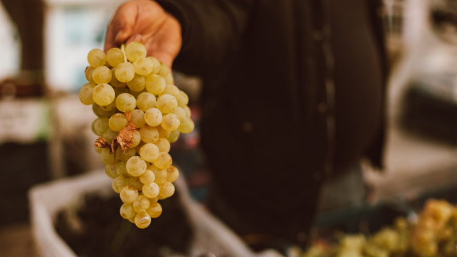 close up shot of a person holding a bunch of grapes